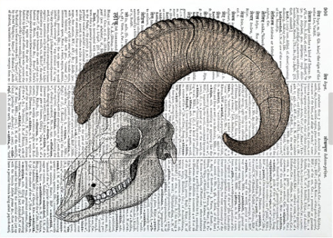 https://www.etsy.com/uk/listing/259130764/animal-skull-print-macabre-art-skeleton?ga_order=most_relevant&ga_search_type=all&ga_view_type=gallery&ga_search_query=skull%20print&ref=sr_gallery_6