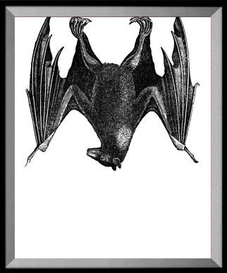 https://www.etsy.com/uk/listing/271506849/bat-art-print-gothic-decor-animal?ref=hp_rv